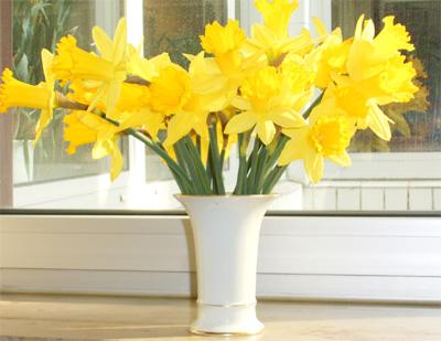 Osterglocken in einer weißen Vase