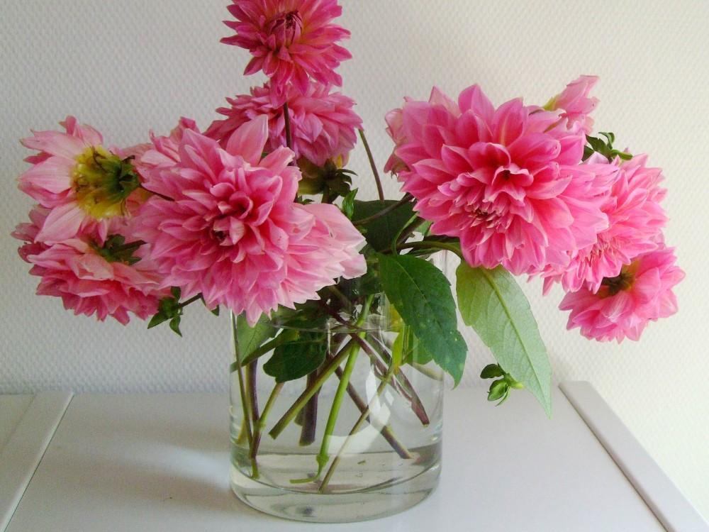 Blumen aus meinem Garten: Pinke Dahlien in einer Vase