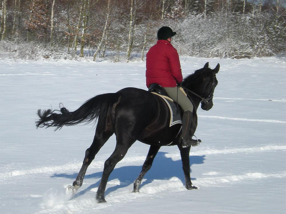 Reiten, auf einem Rappen auf verschneitem Feld