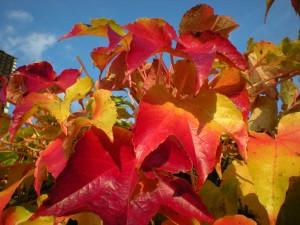 Blätter in den schönsten Herbstfarben