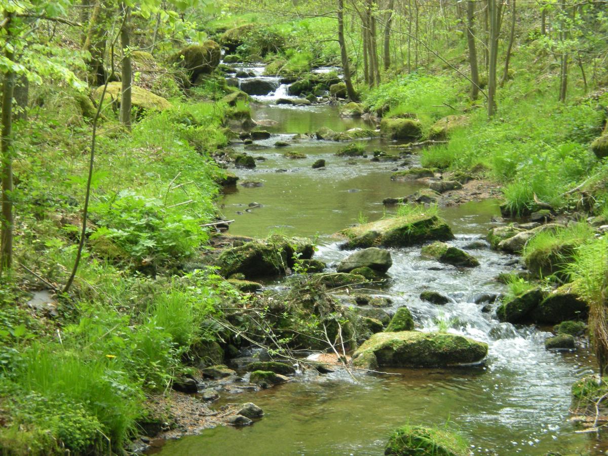 Bachlauf in einem Frühlingswald