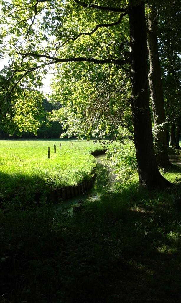 Weide mit Bäumen und kleinem Bachlauf