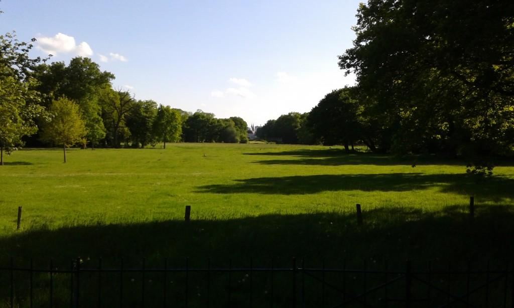 Große Weide mit Bäumen