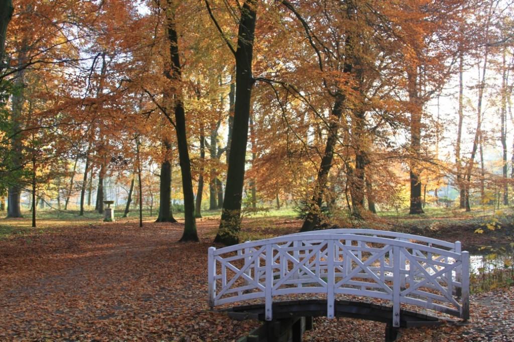 Herbstliche Parklandschaft mit Steg