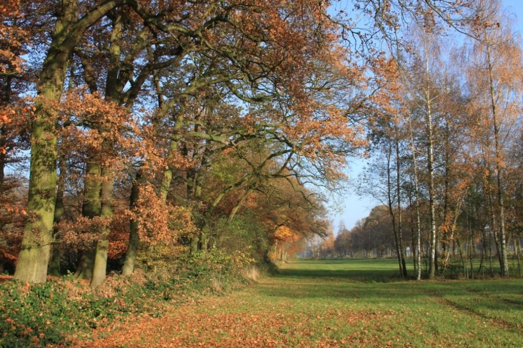 Herbstlandschaft mit Bäumen