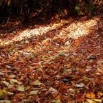 Herbstlaub am Boden