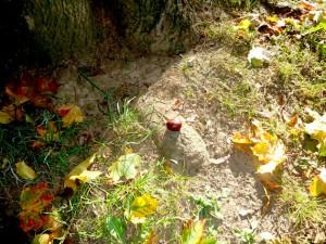 Kastanie und Herbstlaub