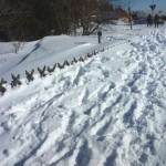 Jägerzaun guckt nur noch mit Spitzen aus dem Schnee