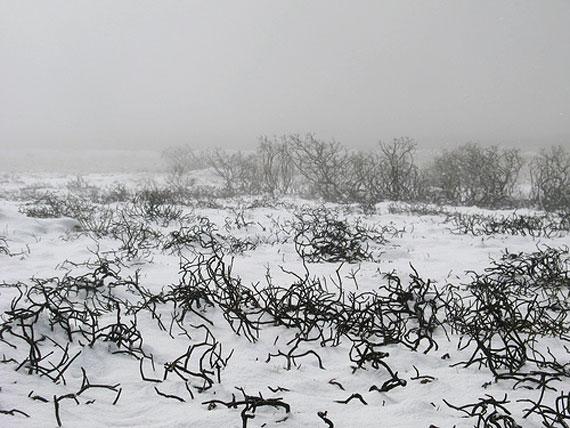Stoppelfeld mit Schnee