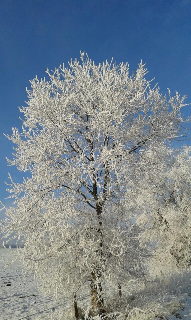 Schneebedeckter Baum