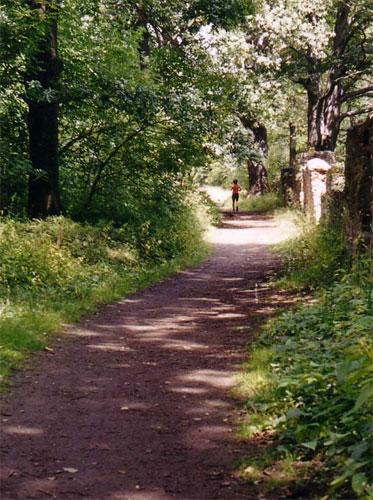 Rente heißt umdenken, Waldweg mit Joggerin
