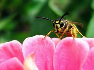 Wespe auf einer Blüte
