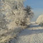 Winterimpressionen Verschneite Straße