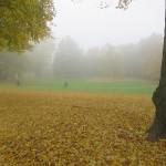 Herbstlicher Park im Nebel mit Fahrrädern