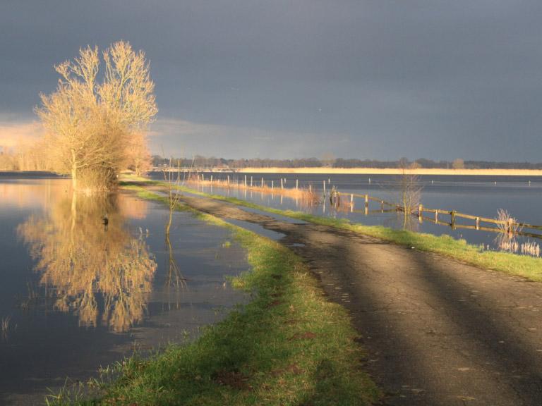Überschwemmte Weiden mit Baum im Sonnenlicht