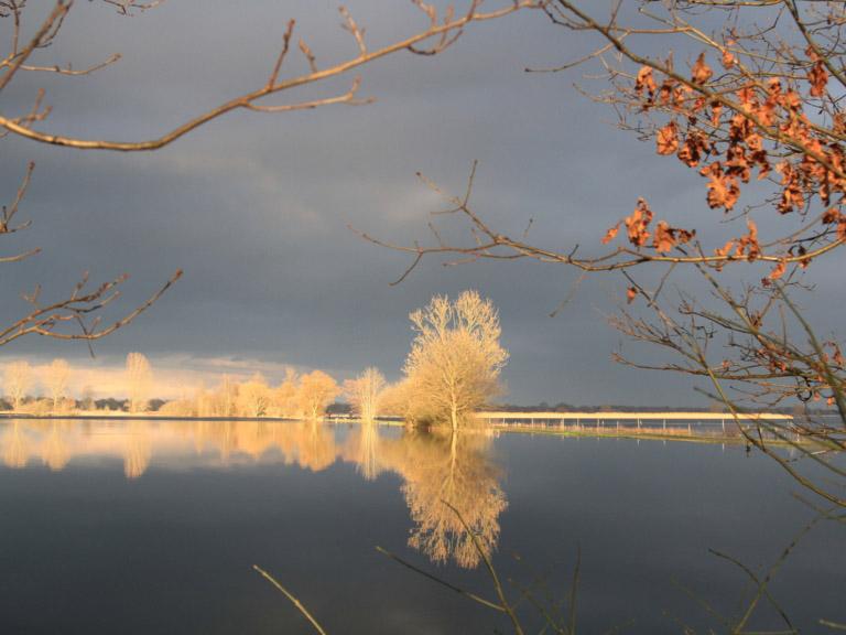 Bäume mit Raureif vor überschwemmter Weide