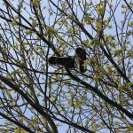 Schuhe hängen im Frühlingsbaum
