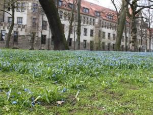 Frühlingsblumen vor der Stadtbibliothek