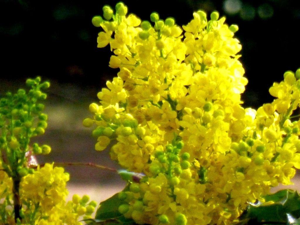 Gelbe Frühlingsblumen