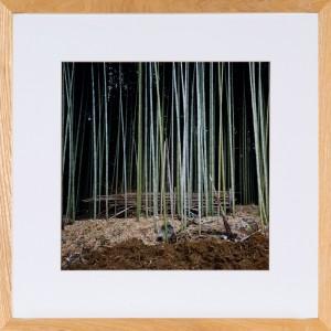 Foto eines Bambuswaldes