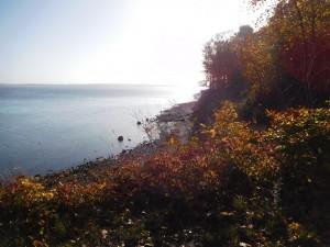 Herbstwäldchen am Ostseeufer