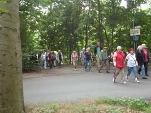 Bewegungstag für ältere Menschen, Viele Personen bei einem Waldspaziergang