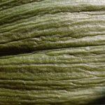 schminken Runzliges Blatt in grün