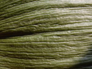 Runzliges Blatt in grün