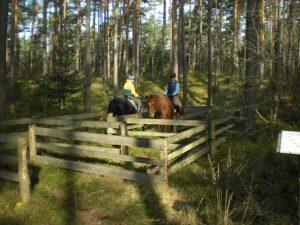 Reiten, Pferde im Gatter