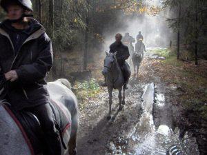 Reiten, Reiter im Wald