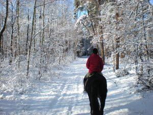 Reiten, Reiterin auf einem Rappen im Winterwald