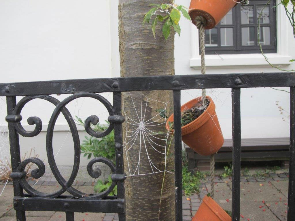 Rechte als Nachbar, Spinnenweben mit Raureif am Gartenzaun