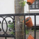 Spinnenweben mit Raureif am Gartenzaun