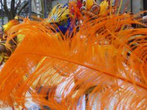 Eine orangene Feder