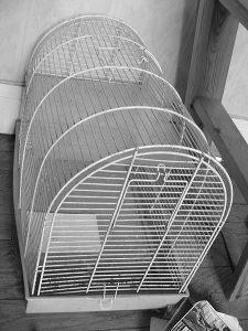 Vogelbauer schwarz/weiß-Bild
