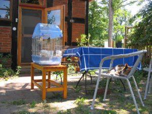 Katze chillt neben einem Vogelkäfig in der Sonne