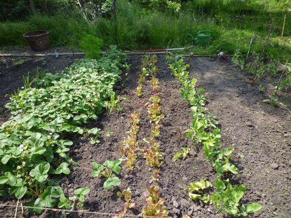 Beet mit Salat und Kräutern