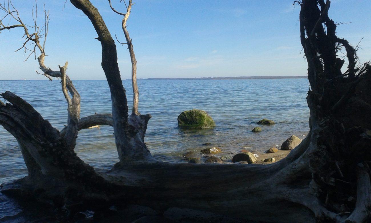 Ausblick auf das Meer durch mehrere Baumstümpfe