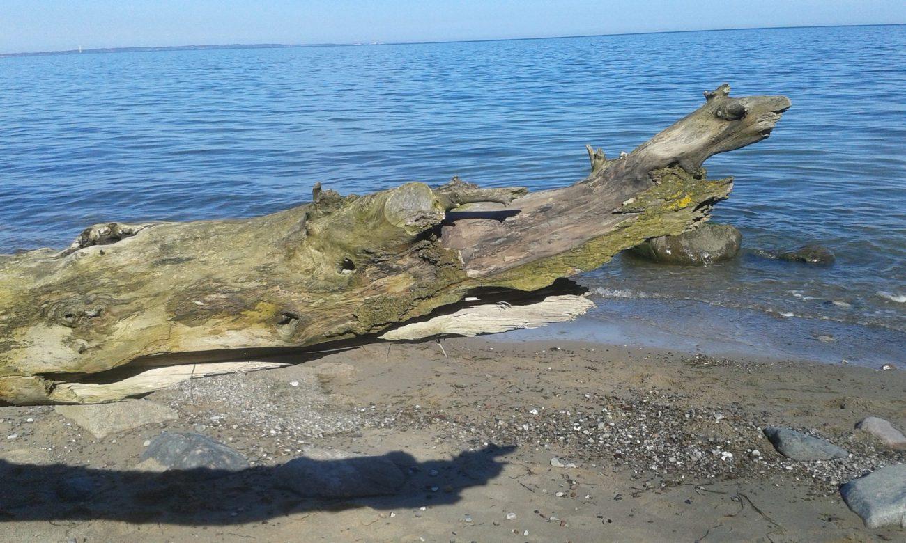 Toter Baumstamm am Meer