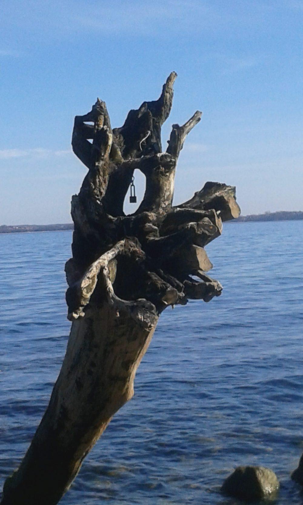 Herausgerissene Baumwurzel. Im Hintergrund das Meer
