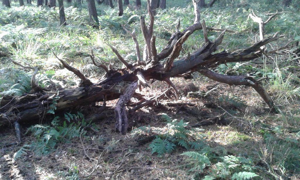Toter Baum am Boden
