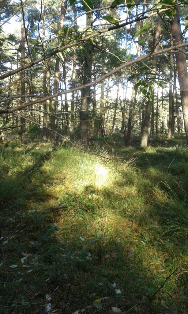 Lichtung mit Sonnenstrahlen