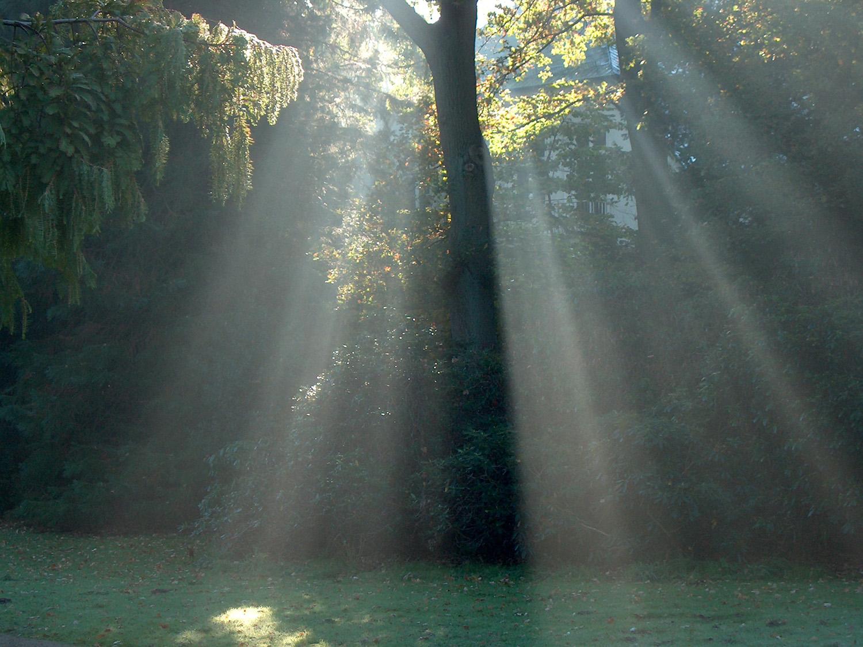Sonne wirft Lichtsrahlen über einen Baum im Nebel