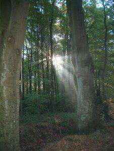 Sonne scheint durch Bäume im Nebel