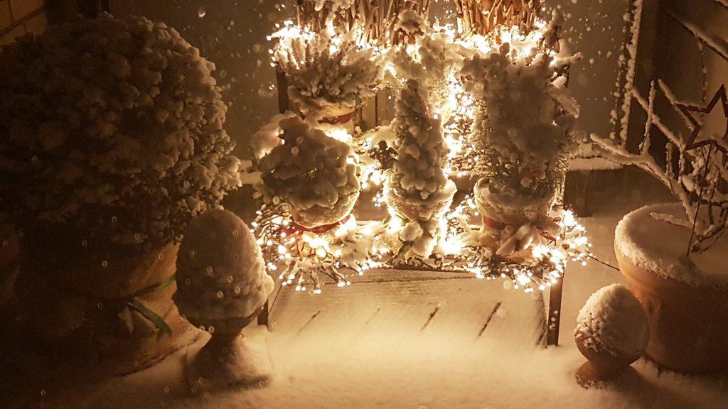 Winter in Bremen, verschneite Pflanzen mit Lichterkette beleuchtet
