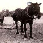 Bauer mit Pferd und Ackergerät