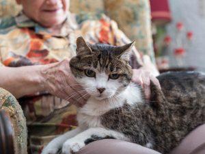 Katze sitzt auf dem Schoss einer älteren Frau