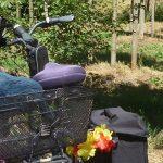 zwei abgestellte Fahrräder am Waldrand