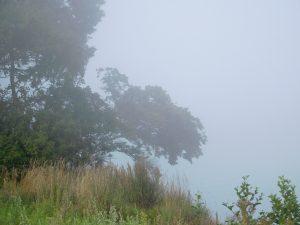 Bäume und Sträucher im Nebel